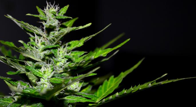 3 Cannabis Companies Discuss Emerging Market Opportunities