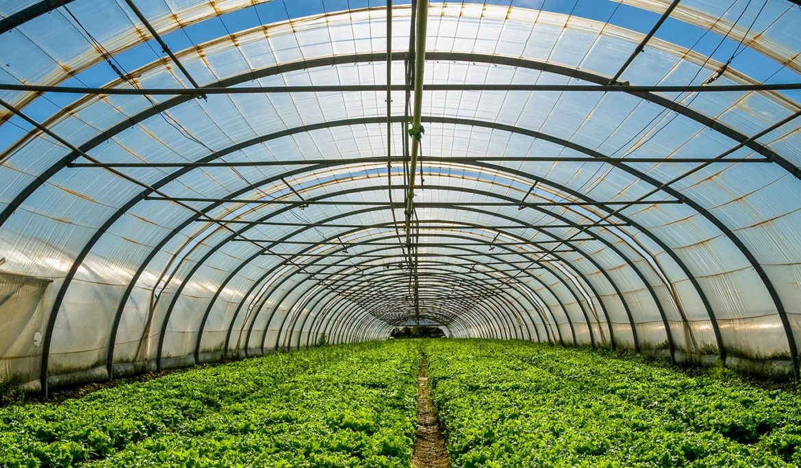 Avicanna Acquires Majority Interest in Colombian Cannabis Cultivator